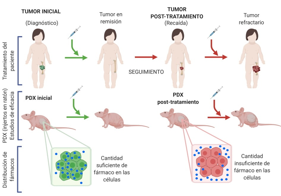 Chart showing the creation process of avatar tumours in mice infected with Ewing's sarcoma